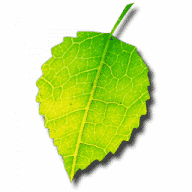 Shade free download for Mac