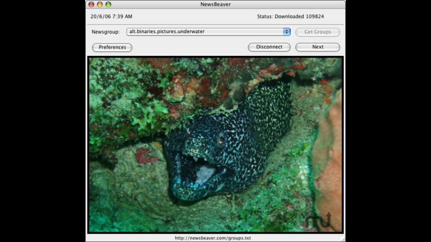 NewsBeaver for Mac - review, screenshots