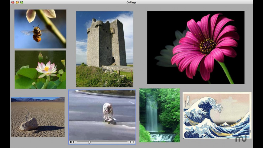 Coriander Collage for Mac - review, screenshots