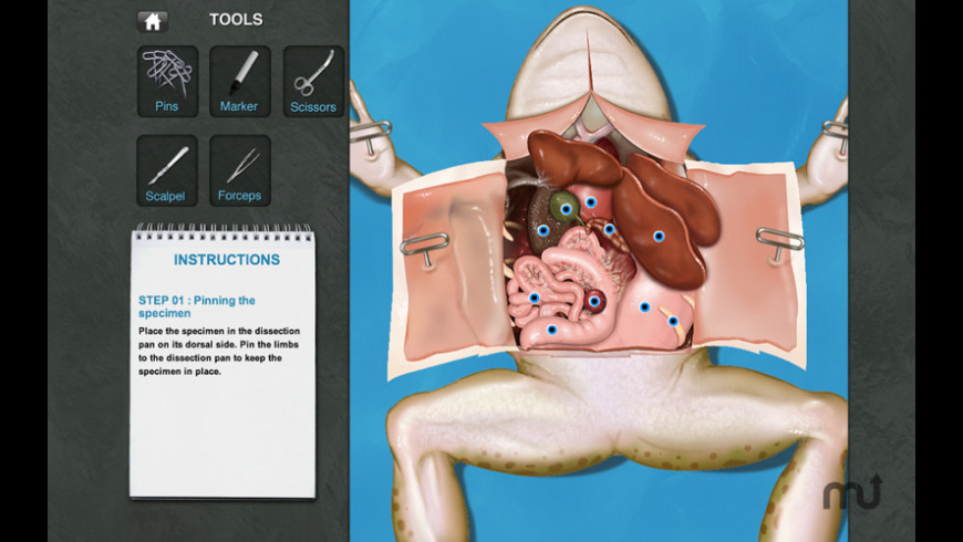 Frog Dissection for Mac - review, screenshots